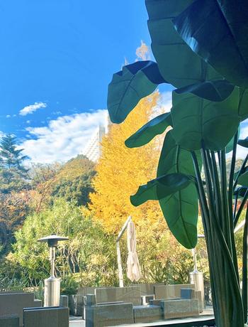秋が深まるとテラス席から紅葉を楽しむことができます。都心にいながら季節の移ろいを感じられるのは素敵ですね。