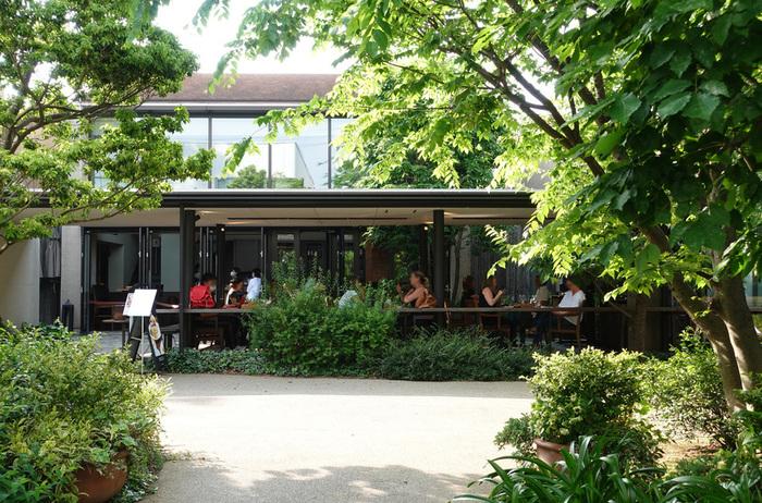 """""""森の図書館""""と例えられるこちらのテラスは、シンボルツリーの大ケヤキを中心に、たくさんの緑に囲まれています。"""