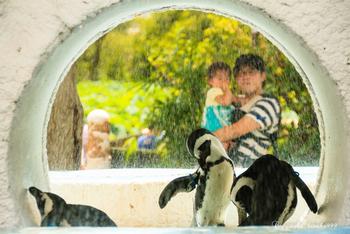 上野動物園はパンダの他にも、元気で魅力いっぱいの動物たちがたくさん!その数なんと350種。日本固有の動物や世界中のめずらしい動物、歴史的建造物なども見どころです。