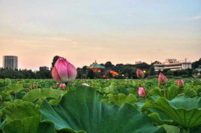 上野恩賜公園は、明治6年に浅草・深川などとともに日本で初めて公園に指定されました(上野には日本初がいっぱい?!)。多くの歴史的建造物や文化施設を携え、都会の真ん中にありながらその喧騒を離れおだやかな気持ちで過ごせるオアシスのようですね。