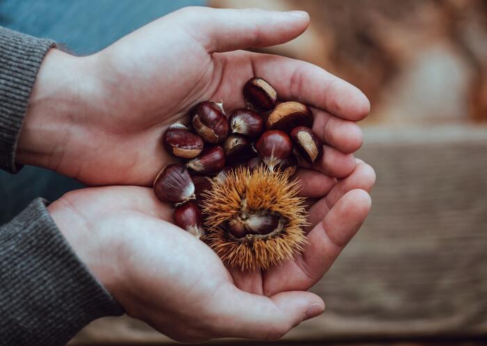 秋の小さな実りをおいしく味わおう♪【栗・銀杏・落花生】の最旬レシピ帖