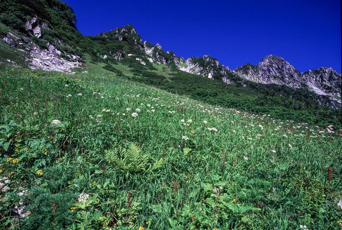 千畳敷カールとは、中央アルプスの名で知られている木曽山脈にある宝剣岳の直下に広がる氷河地形です。千畳敷カールは高山植物の宝庫としても知られており、標高2500メートルを超えるこの場所には、珍しい高山植物が競うように花を咲かせています。