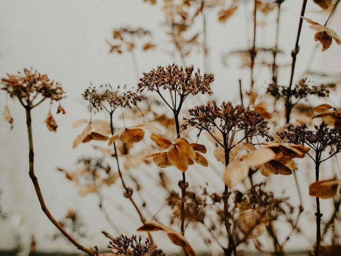 肌寒い夜に心温まろう。秋に聴きたくなるフォークシンガー特集