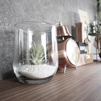 陶器やガラス、ブリキのホルダーに入れて飾るのも手軽なのに可愛らしい印象に仕上がります。ガラス製のホルダーには、白い砂を入れることで、おしゃれ度アップ!100円ショップなら、様々なタイプのホルダーがお安く販売されているのでおすすめですよ。