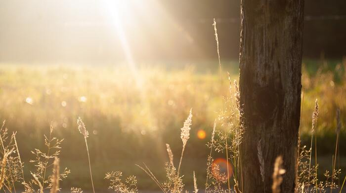 夏から秋に移り変わるとき、日が落ちるのが早くなりますよね。そうすると日を浴びることで分泌されると言わている「セロトニン」が減少する傾向にあるのだとか。セロトニンはリラックスや安心感、幸福感をもたらす幸せホルモンとも呼ばれているので、減少してしまうと気分が落ち込みやすくなると考えられています。