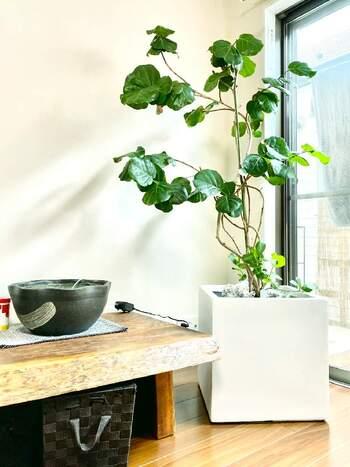 深呼吸したくなるお部屋に*空気をキレイにする植物「エコ・プラント」を育てよう