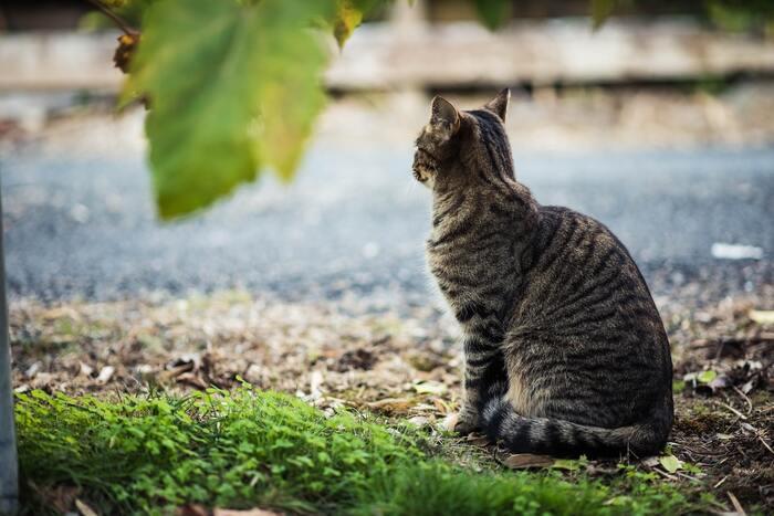 亡き妻の残した料理レシピノートを完成させることが趣味の大吉じいちゃんのほのぼのとした穏やかな生活を猫の目線を取り入れながら優しく描かれています。