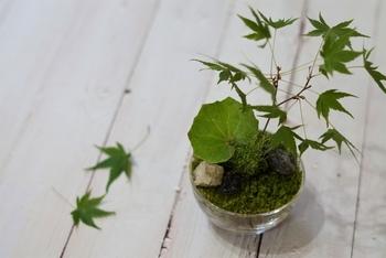 おうちで楽しむ小さな自然。「コケテラリウム」の作り方・楽しみ方