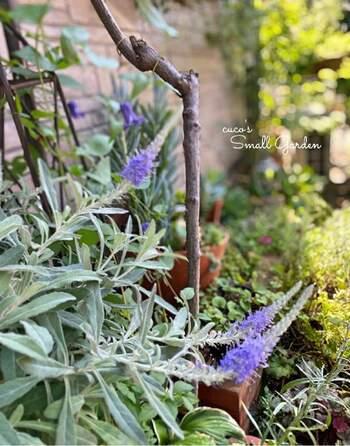 日陰でのガーデニングは、「シェードガーデン」という言葉もあるぐらい一般的。スミレやアジサイなど、北欧風の庭づくりにぴったりの雰囲気あるお花も、シェードガーデンにおすすめとされています。陽が当たる時間帯や場所をチェックしつつ、庭づくりを楽しみましょう♡