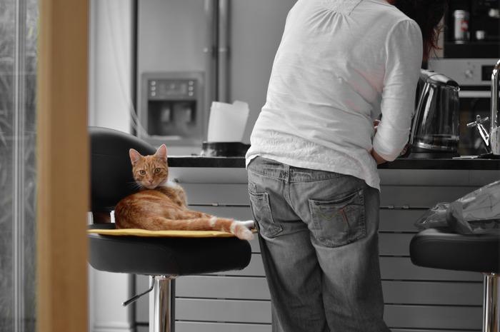 料理中いい匂いにつられて足元をウロウロしたり、ゴミ箱や台所の上に乗って構ってアピールしたり。そんなペット達の行動に愛おしさを感じて見逃しがちですが、キッチンには火元や刃物など、危険がいっぱいです。また、ペット達がつい落ちた食べ物を拾い食いしてしまうと、中毒を起こして健康に悪影響を及ぼす可能性もあります。