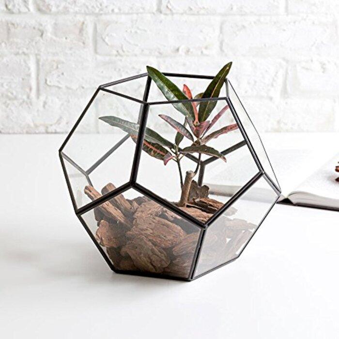ガラスと真鍮でできた多面体テラリウム [大]
