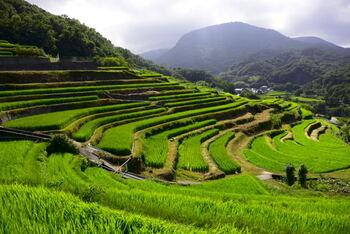 日本の棚田百選にも選ばれている、美しい階段状の田んぼが一面に広がる中山の千枚田。  5月下旬には蛍が見られるほど、あるがままの自然が汚されることなく存在しています。