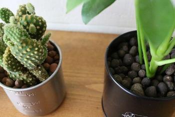 底に穴をあけなくても水やりができる、便利なハイドロボールを土の代わりに入れるのもおすすめ。虫も付きにくく、お気に入りの缶や瓶にも植えられるので、お部屋でも気兼ねなくインテリアグリーンとして飾ることができます。