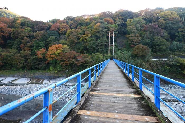 JR「谷峨駅」を出て、目の前の県道728号線を右に直進。なだらかな坂を上がると、右手に御殿場線、246線を跨ぐ〈谷峨跨線橋〉があるので渡ります。  国道246号線沿いを左折し、橋の下の階段を下り、水田の中に伸びるアスファルトの道を直進します。酒匂川に架かる青い吊橋を渡ったら、舗装道路(県道727号線)を左折し、川岸に沿って進みます。 【11月中旬頃の酒匂川と吊橋。全長50m程。最大で10人まで、振動を無理に与えないこと。】