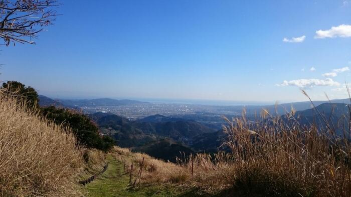 フェンスの先を少し上ると、視界が開け、富士山が目に入りはじめます。そのまま、牧草やススキ野が広がる斜面に伸びる山道を進みます。【12月下旬頃の「大野山」山頂付近の登山道からの眺め(正面に見えるのは相模湾)】