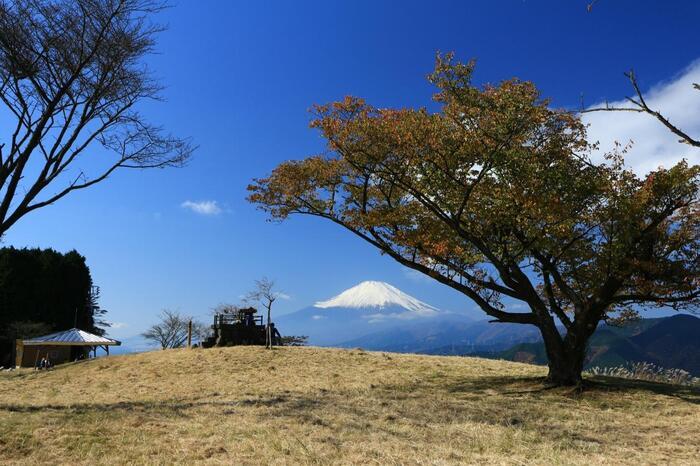大野山の山頂は、木々が少なく、広々。富士山や箱根の山々、丹沢山系と丹沢湖、相模湾方向にも開け、四方の景色をダイレクトに楽しむことが出来ます。【11月中旬の大野山・山頂】