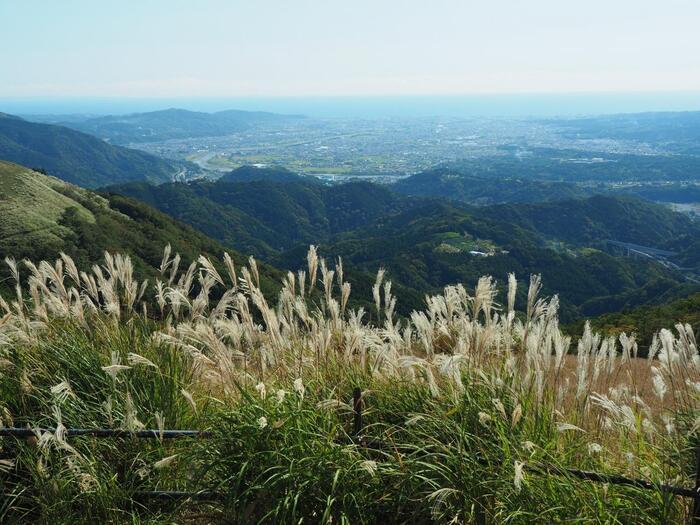 神奈川県には、そうした豊かな自然、地勢を活かした、ハイキングコースやウォーキングコース、登山コースが、数多く設定されています。【10月下旬の「大野山ハイキングコース」山頂付近からの相模湾方向の眺望】
