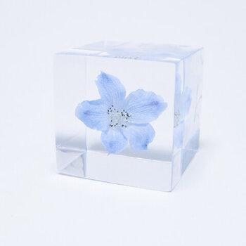 自然の造形美を、標本として届けてくれる「ウサノネドコ」のガラスオブジェ。鮮やかな青色のデルフィニウムをアクリルで閉じ込め、キューブ型の標本に仕上げています。さまざまな植物をシリーズとして展開しているので、ぜひお気に入りのひとつを見つけてみてくださいね♪