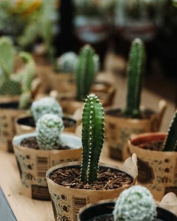 世界中には5.000種類以上のサボテンがあり、品種改良によって種類が増え続けている、愛好家の多いサボテン。あまりにも種類が多すぎて名前や特徴、育て方が分からないという方のために、園芸において代表的な3種類をご紹介します。