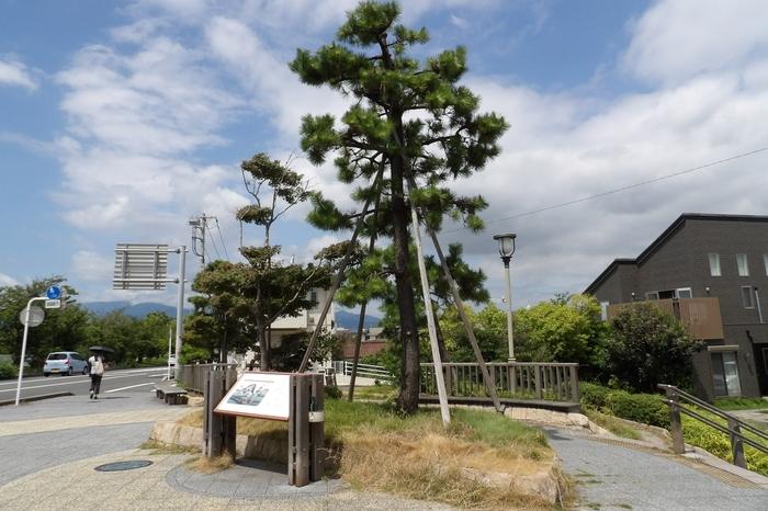 「高来神社」から、住宅街を抜けて、国道1号線(東海道)に出て、左手方向が「大磯駅」ですが、時間があるなら「平成の一里塚」へ立ち寄ってみましょう。  「平成の一里塚」は、かつてこの近辺にあった江戸日本橋から14番目の一里塚を、歩道整備工事の一環として平成22年にポケットパークとして整備されたもの。江戸時代に設けられた一里塚と同様にエノキが植栽されています。花見川と高麗山の景色も良く、一息入れるのも良いでしょう。】