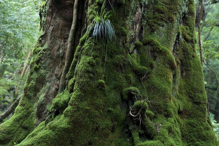 壮大な自然が美しい「屋久島」へ。縄文杉だけじゃない魅力をご紹介