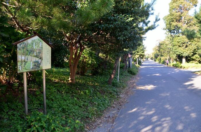 「高来神社」(又は「平成の一里塚」)から国道1号を西に歩くと「化粧坂交差点」。ここから左方向に伸びているが「旧東海道」です。住宅街に伸びていますが、所々に残る松並木がかつての風情を伝えています。  途中で東海道線の地下道を歩きますが、旧東海道を道なりに進めば、再び国道1号線に合流し、「大磯駅前交差点」を右折すれば「大磯駅」に到着します。【11月初旬の旧東海道松並木(「化粧坂の一里塚周辺」)】