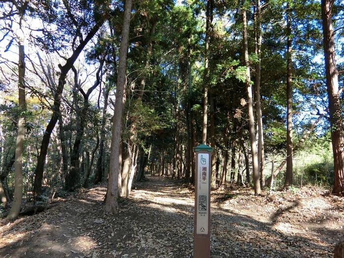 湘南平へ続く坂田山の一角にある「高田公園」は、戦前の昭和期に活躍した、劇作家/随筆家・高田保(たかだたもつ)の没後に、町民有志によって作られた公園です。当公園は、小規模ながらも緑多く、相模湾の景色も望めます。  「高田公園」の右手を進んでいくと、登山道が始まります。雑木林に覆われた道を上って行くと、「湘南平」へ通じる分岐があります。「湘南平」は、ハイキングコースから外れますが、ここは、当コースのハイライト。ぜひ立ち寄って眺望を楽しみましょう。【「高田公園」から「湘南平」へと向かう登山道入口】