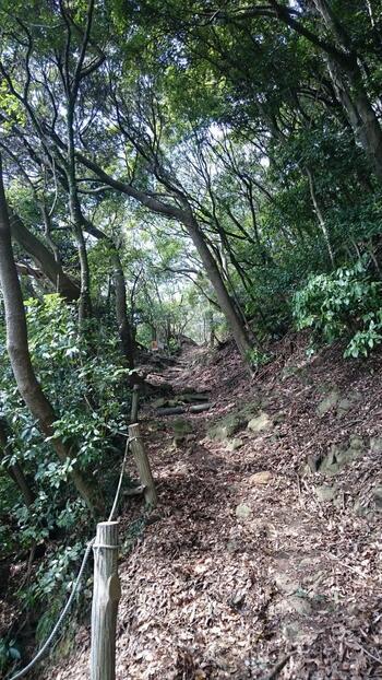 高麗山の山頂から石段を下っていくと、急坂の「男坂」と緩やかな「女坂」(共に717年建立)に分岐します。 【緩やかな傾斜の「女坂」】