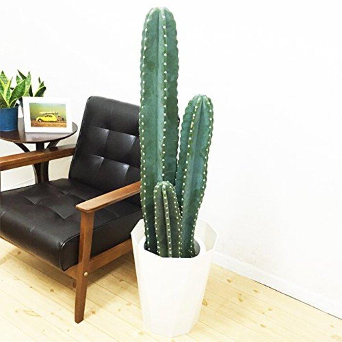 柱サボテン 3本立 サボテン 8号鉢 スタイリッシュな白色鉢カバー付 観葉植物 本物 中型 大型 インテリア