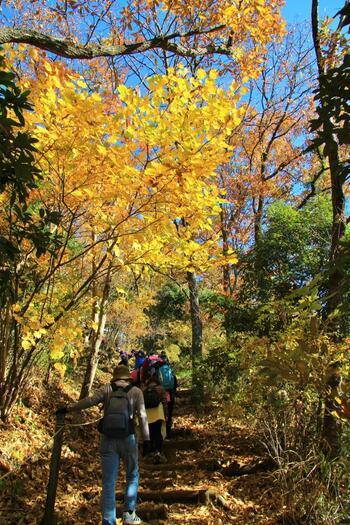 高い山を上れるほど、体力はないけれど。 せっかく休日、ちょっとだけ山を歩きたい。  出来るなら、時間もお金もかからずに。 最寄りの駅に着いたら、そのまま歩いていくだけ。   【紅葉の頃の「弘法山ハイキングコース」】