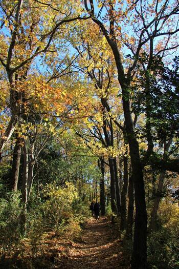 """木々を揺らす風の音。鳥の囀り。枯れ草の匂い。花の香り。林道の木漏れ日…  名山でなくても、低山であっても、近場の山でも。一歩山に踏み入れば、豊かな自然を、直に肌で感じることが出来ます。  緑や水の景色を味わい、てっぺんの眺望を愉しめば、心身に溜まった澱や詰まりも綺麗サッパリ消え去って、身軽な自分自身と再び出会えることでしょう。  ちょっと""""山登り""""したくなったら、何となくリフレッシュしたくなったら、記事を参考にぜひ""""低山ハイキング""""へお出掛け下さい。  【「弘法山ハイキングコース」弘法山~吾妻山への登山道(12月初旬)】"""