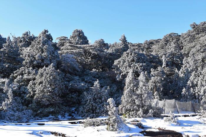 屋久島のオンシーズンは3月~11月。温暖なイメージのある屋久島ですが、1~2月は積雪の可能性があります。登山に慣れている場合を除き、安全のため避けましょう。また、梅雨の時期の屋久島は雨量が大変多く、大雨・土砂災害警報が出たり、川が増水したりして登山をするには危険な場合があります。