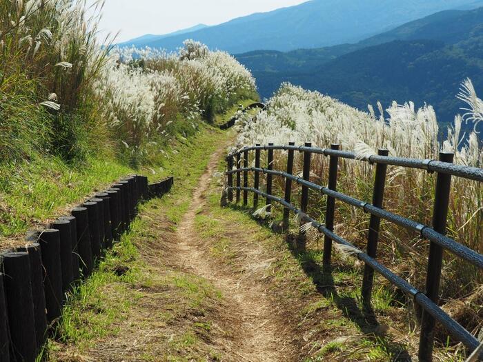 【ススキ野の登山道が続く「大野山ハイキングコース」】