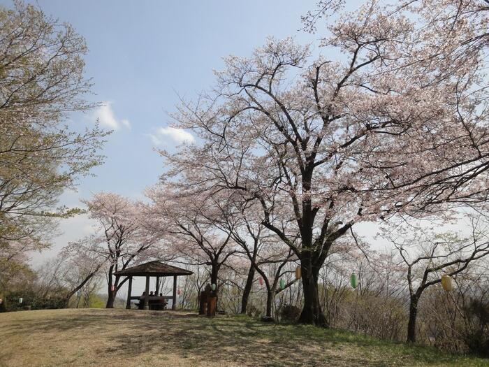 浅間山~権現山間にある「あずまや」は、見晴らしが良いのでぜひ立ち寄ってみましょう。山々に囲まれた秦野市街が一望出来ます。【4月初旬桜の頃の「あずまや」】