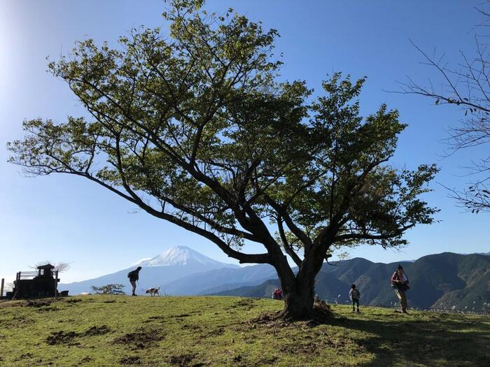 """山の頂きに腰を下ろし、お弁当でも広げて。 周囲の景色を眺めながら、その一時をゆったりと味わいたい。  そんな気分になったのなら、都心部からアクセス抜群の""""低山ハイキング""""へと出掛けましょう。 【10月下旬頃の「大野山」山頂】"""