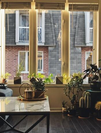 【日光】 本来のサボテンが育つ環境に近づけるため、葉焼けの原因になる強い直射日光は避けつつ、日光が当たる空間、かつ、風通しの良い場所で管理しましょう。心配な時はレースのカーテン越しでもOK。 【温度】 寒さに弱い品種でも5℃以上を保っていれば冬越しは可能です。その場合は室内にて、窓辺は避けて置きましょう。 【用土】 土は水はけの良いものを使います。市販のサボテン専用の土でも可能です。 【肥料】 肥料を入れる場合は、植え替え時にゆっくりと効きめの続く緩効性化成肥料を少し混ぜましょう。サボテンのように水を与える回数が少ない植物の場合は、置き肥が土に浸透していかないため、植え替え時に肥料を一緒に植え込む元肥(もとごえ)という方法を使います。