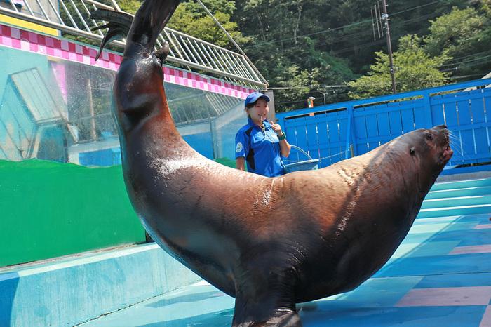 """""""距離感ゼロの水族館""""をテーマに、訪れる人々を魅了している「伊勢シーパラダイス」。セイウチにタッチができたりカワウソとの握手会が開催されたり、水族館にいる動物たちをより身近に感じて触れ合うことができるのが魅力です。動物好きにはたまらない体験は、お子様はもちろん大人も満足間違いなしです。"""