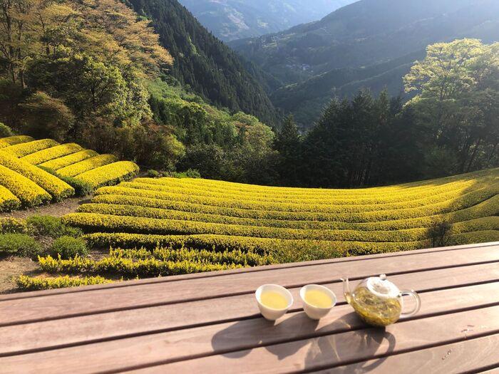 写真/黄金の茶の間(黄金みどり茶園)