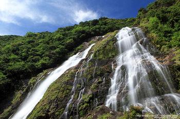 雨量が多い屋久島には滝がいくつもあります。中でも最大級の滝が大川(おおこ)の滝。落差は88mもあり、壮大な景色が目の前に広がります。
