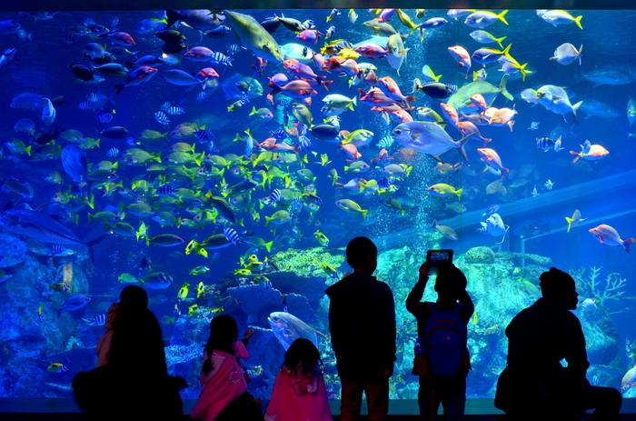 """""""飼育種類数日本一""""をテーマに観光客を楽しませている「鳥羽水族館」。国内最多の約1200種もの生きものに出会えるのは魅力の一つ!"""
