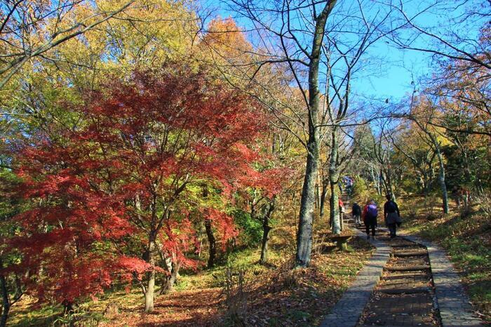 先程の分岐へと戻り、もうひとがんばりすると「弘法山」山頂です。【12月上旬の山頂手前の緩やかな階段道】