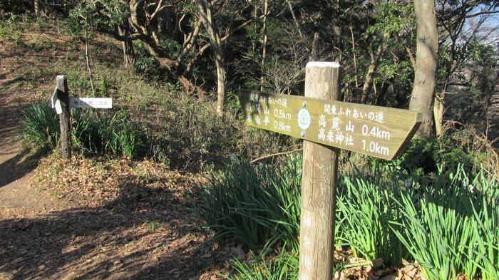 """""""プチ登山""""にうってつけなのが、湘南海岸沿い、大磯町と平塚市に跨る「高麗山」のハイキングコースです。""""プチ""""といっても、幾つかのピークを縦走するコースなので、短距離でも山登りの気分をしっかり味わえます。  【1月初旬の「高麗山ハイキングコース」(画像は、水仙が群生する「浅間山」~「高麗山」間の山道)】"""