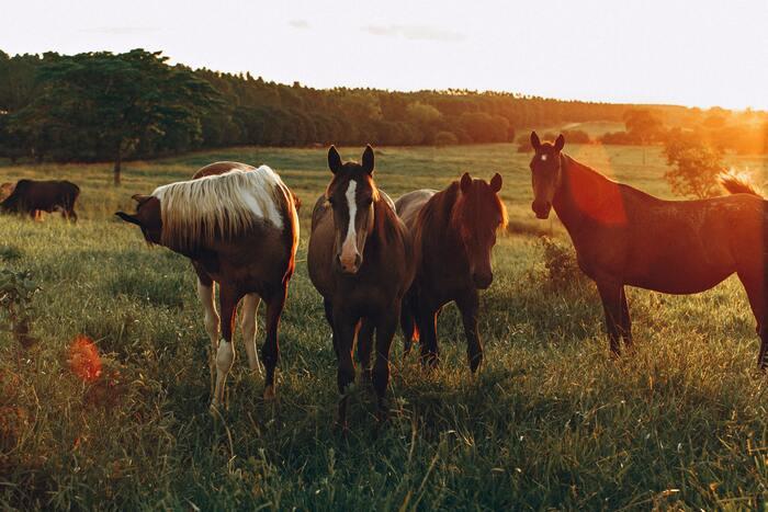 ドイツの人々は、なぜそこまで散歩が好きなのでしょうか。一つには、気分転換のためです。自然が多い場所なら、近所で育てられている牛や馬、ときには羊の群れに出会うことも。街中なら、新しいお店や今まで知らなかった通りを冒険するのも心が躍ります。行動にメリハリがつけられ、時間をコントロールするのにも役立ってくれます。
