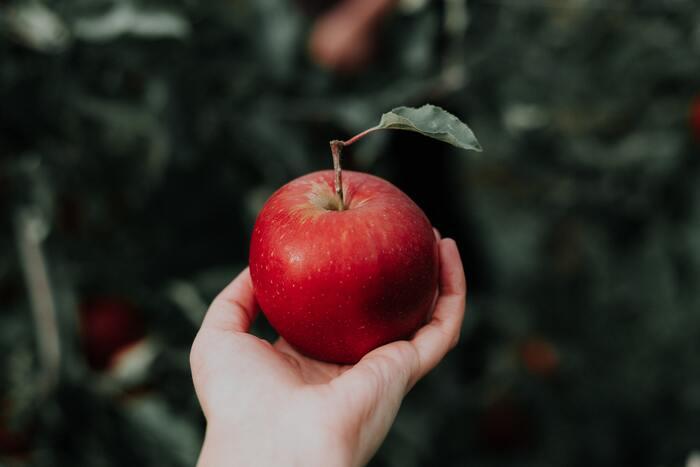 りんごは、秋から冬にかけて旬を迎えます。赤りんごや青りんごなど、色だけでなくさまざまな種類があるので、それぞれのレシピに向いているりんご探しも楽しんでみてください。お菓子作りには、そのまま食べるにはちょっと酸っぱいりんごが向いていて、種類では「紅玉」がよくおすすめされています。とはいえ他のりんごではダメというわけではありません。酸味はレモン汁を加えることで補える場合もあるので、手に入ったりんごで工夫しながら作ってみてくださいね♪