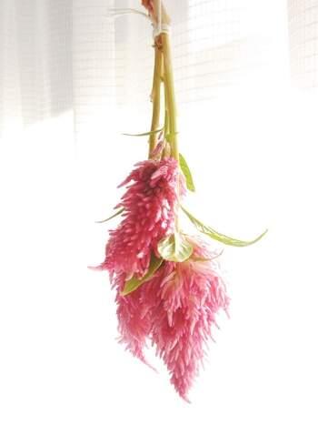 赤や黄色など、鮮やかなカラーのケイトウは、ドライフラワーにすればしっとりと落ち着いた雰囲気に変化。花束のおしゃれなアクセントになってくれるはずです。