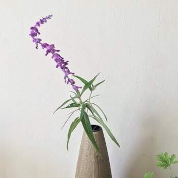 淡い紫色が美しいアメジストセージは、稲穂のような長いシルエットが特徴。存在感があるので花束はもちろん、一輪で挿しても趣ある雰囲気に。