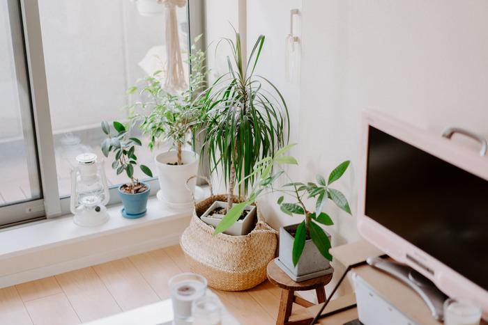 海外リゾートな雰囲気を高めてくれるのが観葉植物。緑の有無で海外風インテリアの完成度に差が出ますよ。ヤシ類やモンステラなど南国を思わせるものを選んでもいいですね。
