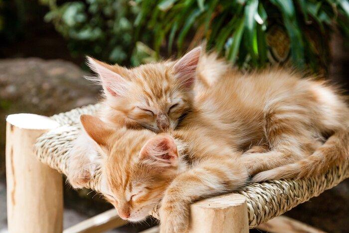 ペットには、触れ合う人の心を癒す力があり、ストレスを軽減させたり、人間に自信を持たせたりなど、精神的な健康を回復させてくれると言われています。しかし、なかなかペットが飼えない環境の人もいるでしょう。そんな時は動物カフェがおすすめです。