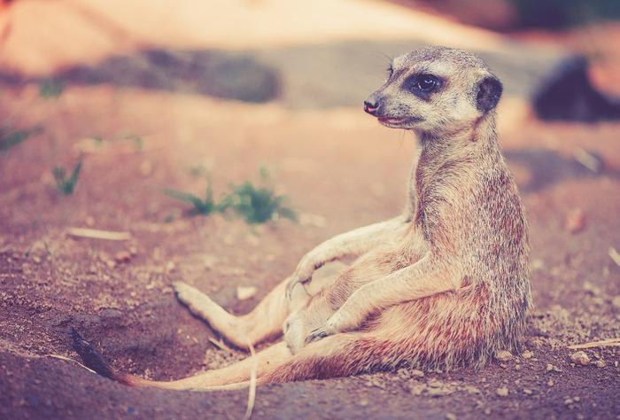 水族館と同じように動物園も疲労回復が期待できます。動物を見ていると、なぜか優しい気持ちになりますよね。実は、「アニマルセラピー」と呼ばれるセラピー手法が存在するほど、その効果は絶大。しかも動物園はなるべくその動物達の元々の生活環境に近い状態を再現しているため、自然の中でのびのびと暮らす動物達に癒されること間違いないでしょう。
