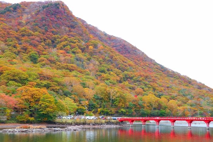赤城山の山々は、毎年、だいたい10月中旬~11月中旬まで、美しい紅葉で目を楽しませてくれます。紅葉の名所として名高く、この時期は絶景をカメラにおさめようと、写真愛好家も多く訪れます。